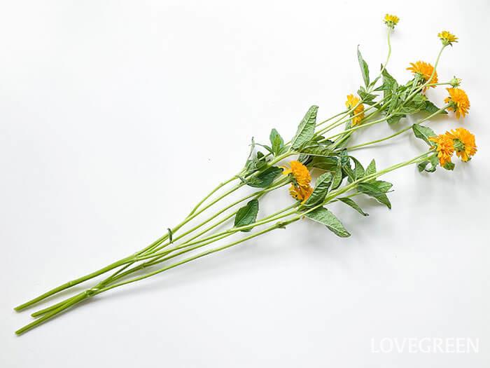 スプレー咲き(1本の茎が先端で枝分かれして、多数の花を付ける咲き方)なので、切り分けて様々なアレンジを楽しむことができます。