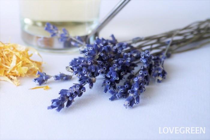 学名:Lavandula 科名:シソ科 使用部位:花 効果効能:ラベンダーは甘い芳香が特徴のハーブです。ラベンダーのハーブティーにはリラックス、不安やいらだち、不眠などの症状に効果が期待できると言われています。