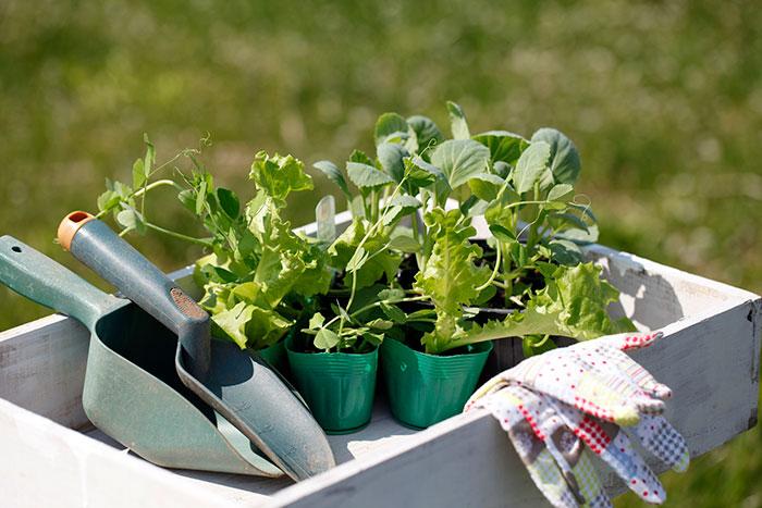 9月~10月は秋冬野菜の植え時です
