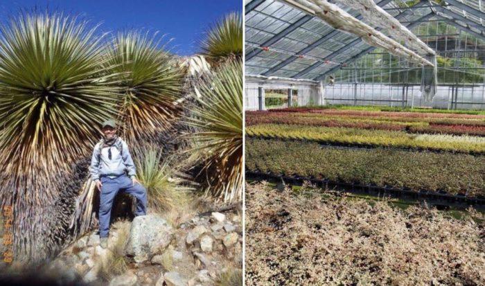 海外に研修に行って、こんな植物もあるんだ!楽しい!と植物の魅力に気づく日々。そんな中で、麻野間さんが始めたのが少量多品種の生産です。