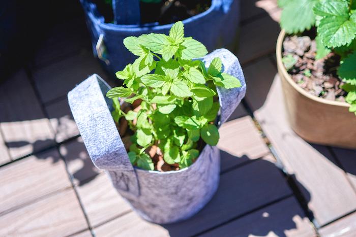 ミントは半日陰等の風通しの良い場所を好むので、日当たりが心配なベランダ菜園でも問題なく育てられます!また、性質が丈夫なので水やりのタイミングさえ覚えればぐんぐん生長してくれます♪