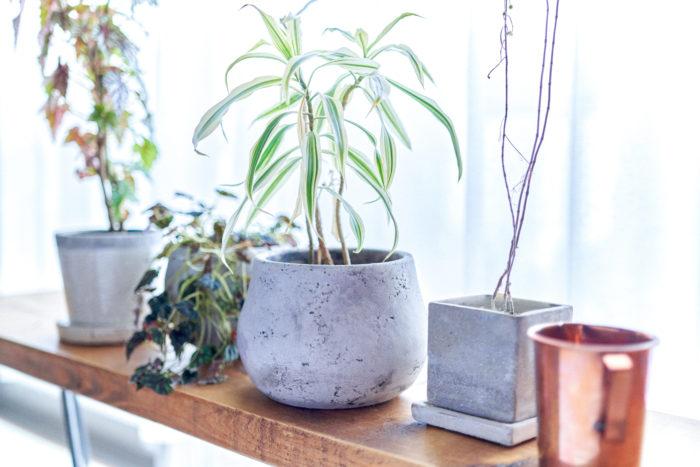 【植物とDRAW A LINE】#2 手を伸ばせば、お気に入りの園芸ツールが