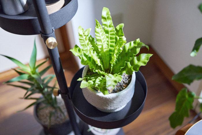 DRAW A LINE「Move rod」をつかって植物をレイアウト