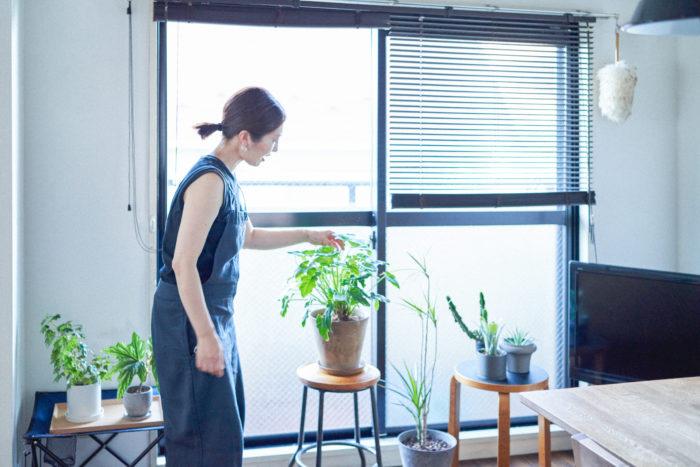 【植物とDRAW A LINE】植物に最適な日当たりを探す