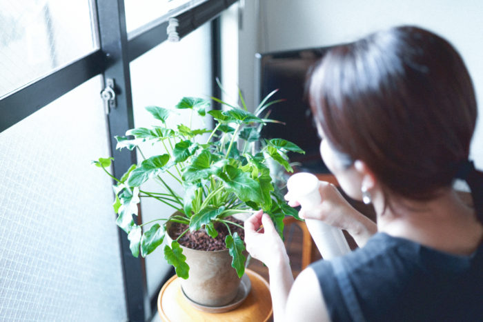 【植物とDRAW A LINE】#1 直線と曲線で暮らしをデザインする 井上愛子さん