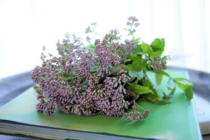 フジバカマ(藤袴)の花咲く季節
