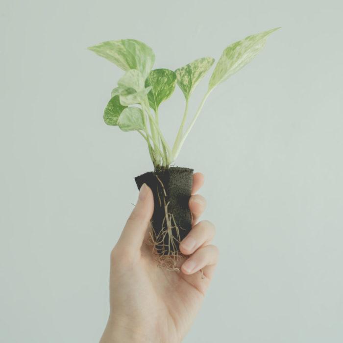 観葉植物 初心者 土の代わり