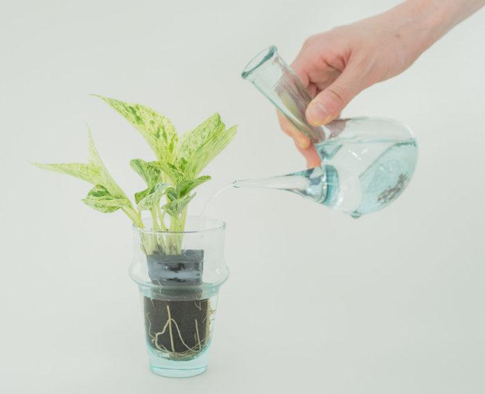 観葉植物 初心者 簡単