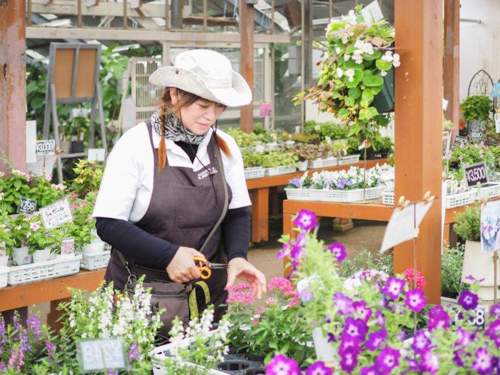 プロがオススメする肥料って?老舗園芸店グリーンプラザカワシマさんに聞いてみました!