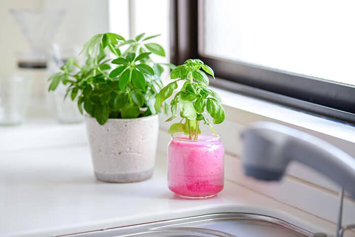 土をすべて落としてセットするので虫がつきにくく、キッチンで育てるハーブなどにも最適です。 カラフルな「マジカルフォーム カラーサークル」や「マジカルフォーム カラースクエア」なら、ガラスの器で楽しめますよ♪
