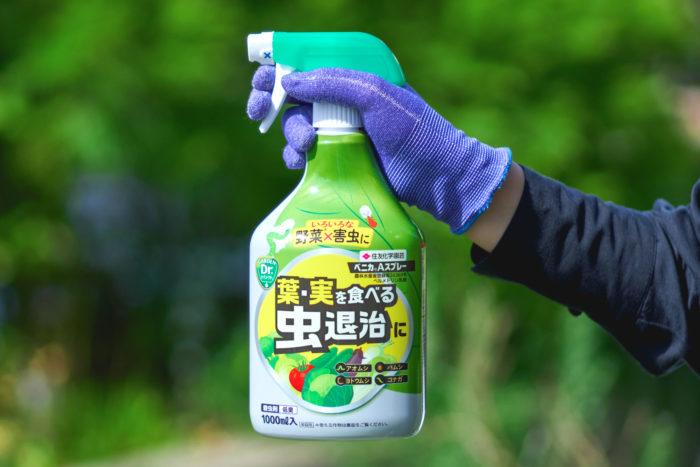 葉物野菜の大敵!害虫を速効退治!「ベニカAスプレー」
