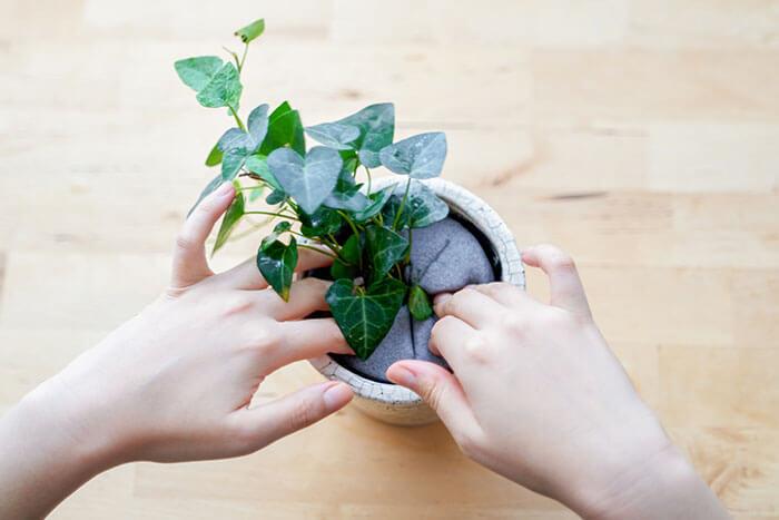 ④植物をセットしたマジカルフォームをお好みの鉢に入れて完成です。大体の大きさが合っていれば押し込むことができますよ♪