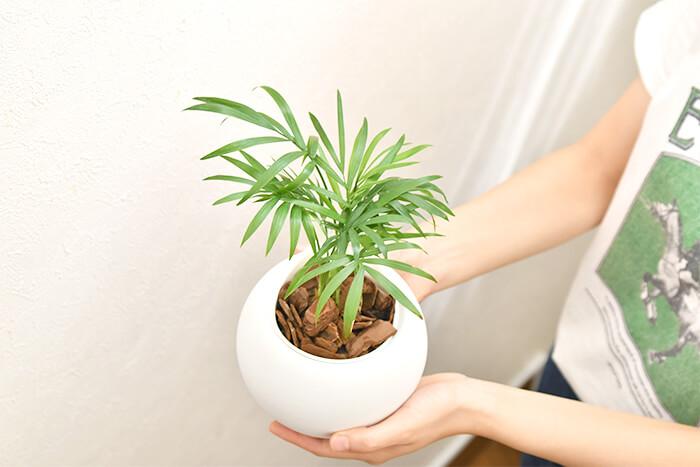ミニ観葉植物」が人気な理由