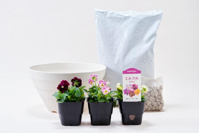 ビオラ ミルフル 栽培セット 販売