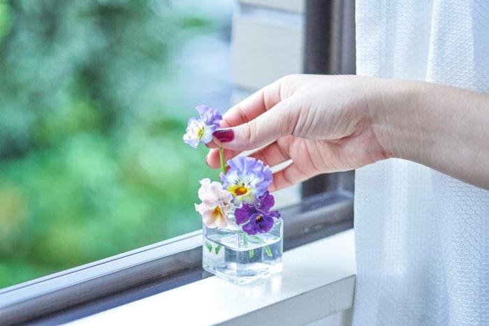 ビオラ 切り花 ミルフル
