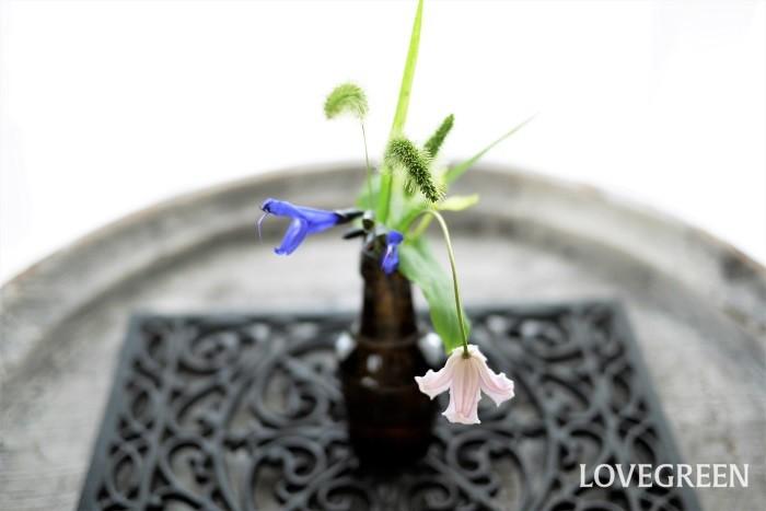 エノコログサを花瓶に生ける